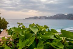 Seascape with vegetation. In the foreground Royalty Free Stock Photography