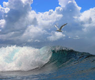 Seascape wave seagull cloudy sky Stock Image