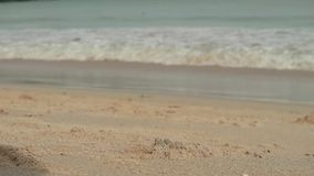 Seascape with waves on sandy shore. cloudy sky and tropical beach. crabs crawl along the shore. Seascape with waves on sandy shore. cloudy sky and tropical beach stock video footage