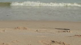 Seascape with waves on sandy shore. cloudy sky and tropical beach. crabs crawl along the shore. Seascape with waves on sandy shore. cloudy sky and tropical beach stock footage