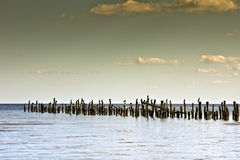 Seascape with a wooden pier and cormorants. Royalty Free Stock Photo
