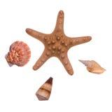Seasells et étoiles de mer Photo stock