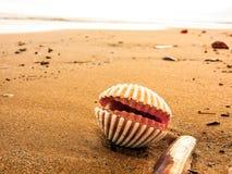 Seashall på våt sand på stranden fotografering för bildbyråer