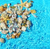 Seasheels and water background blue.Summer holiday relax. Copy space Royalty Free Stock Image