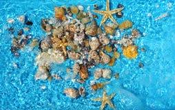 Seasheels y azul del fondo del agua Las vacaciones de verano se relajan fotografía de archivo libre de regalías