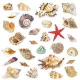 seashel собрания стоковая фотография rf
