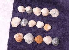 Seashel Royalty-vrije Stock Foto's