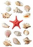 Seashel Fotografie Stock Libere da Diritti