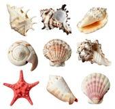 Seashel Stock Image