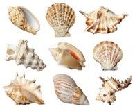 Seashel Fotografia Stock Libera da Diritti