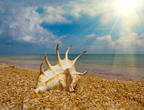 Seashel on beach Stock Photos