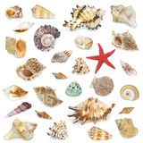 Seashel collection royalty free stock photography
