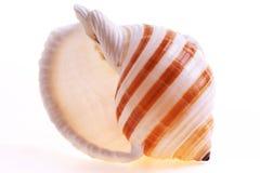 Seashel d'isolement Photographie stock