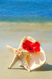 Seashel with hibiscus and starfish Stock Photos