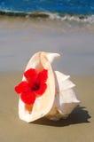 Seashel met hibiscus Stock Foto