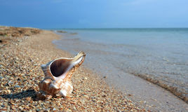Seashel on sea coast Stock Photos