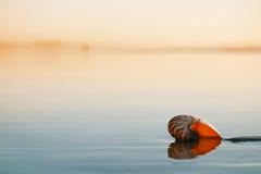 Seashell łodzik na morze plaży pod zmierzchu słońca światłem fotografia royalty free
