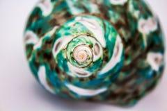Seashell бирюзы Стоковые Изображения