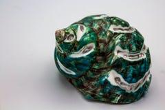 Seashell бирюзы Стоковое Фото