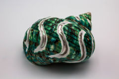 Seashell бирюзы Стоковое Изображение RF