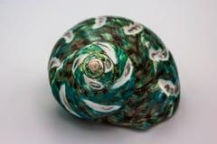 Seashell бирюзы Стоковые Изображения RF