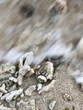 Seashell в волне моря стоковое изображение rf