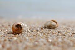 Seashell в песке на пляже и море Стоковое фото RF