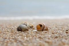 Seashell в песке на пляже и море Стоковое Изображение