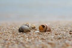 Seashell в песке на пляже и море Стоковые Фото