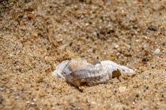 Seashell в песке стоковое фото rf