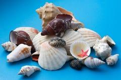 seashell декора сини близкий вверх стоковое изображение