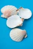 seashell декора стоковые фото