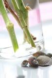 seashell жизни все еще Стоковые Изображения