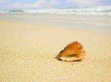 seashell запачканный предпосылкой Стоковое Изображение RF