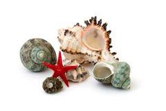 Seashell изолированный над белой предпосылкой стоковая фотография rf