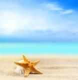 Seashell и морские звёзды на песчаном пляже Стоковые Изображения