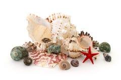 Seashell на белой белизне изолированной предпосылкой стоковое фото rf