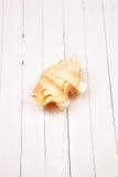 Seashell на белом деревянном столе предпосылки Стоковое Изображение