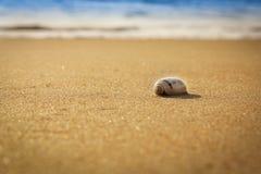 Seashell на глубине поля пляжа низкой Стоковое фото RF