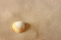 Seashell на песке пляжа стоковое фото