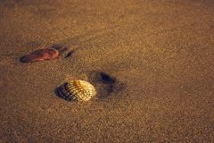 Seashell на песчаном пляже Стоковое Фото