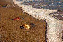 Seashell на песчаном пляже Стоковая Фотография