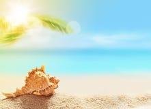 Seashell на песчаном пляже и ладони Стоковые Изображения RF