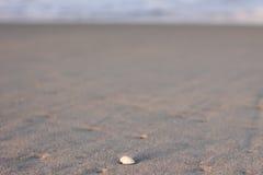 Seashell на песчаном пляже на заходе солнца Стоковые Изображения