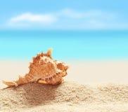 Seashell на песчаном пляже Стоковое Изображение
