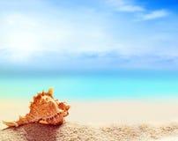 Seashell на песчаном пляже Стоковые Изображения