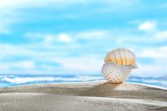 Seashell на пляже Стоковые Изображения