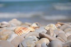 Seashell на пляже Стоковые Фотографии RF