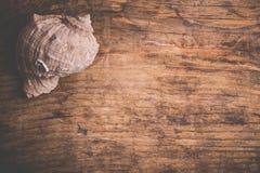 Seashell на старой деревянной поверхности Стоковые Фотографии RF