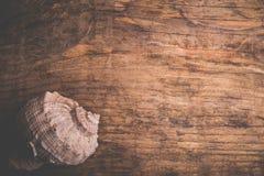 Seashell на старой деревянной поверхности Стоковое Изображение